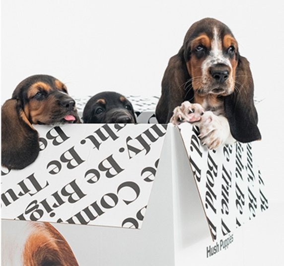 4 basset hound puppies climbing out of a box.